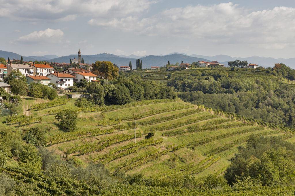 Medana, Goriška Brda, Slovinsko