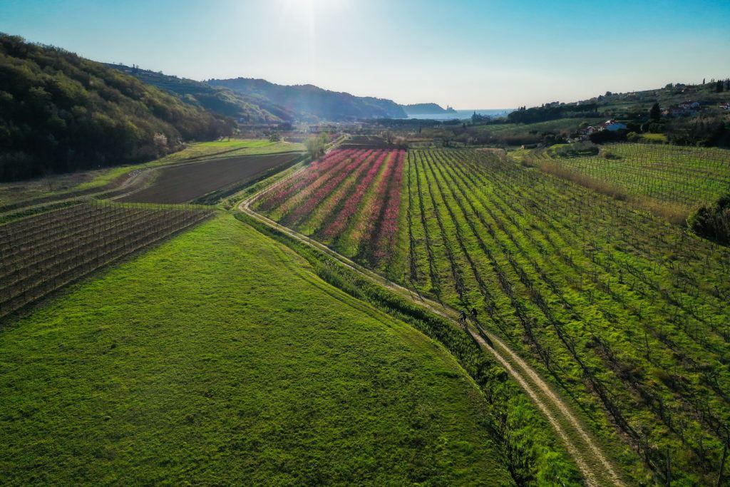 Vinice, Istrie, Slovinsko. Foto: Jaka Ivančič