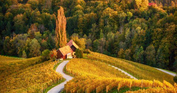 Špičnik, silnice srdce, Slovinsko
