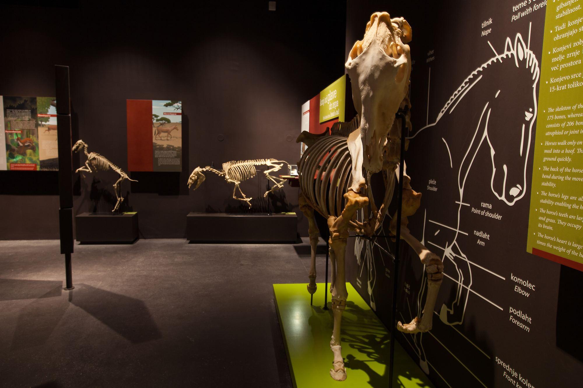 Muzeum Lipikum, Lipica, Slovinsko. Foto: Boris Pretnar
