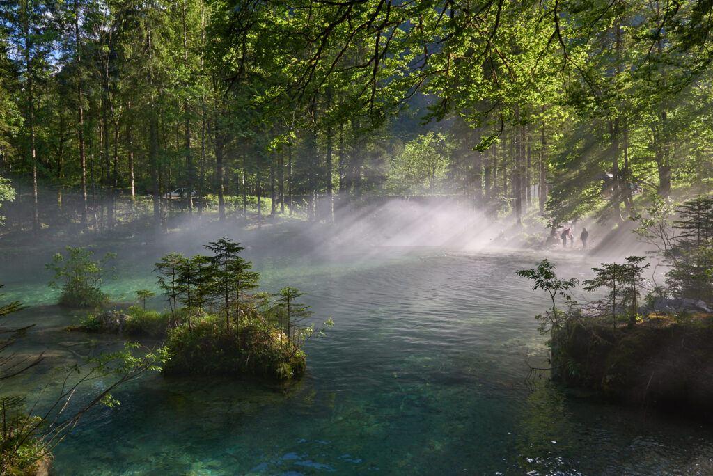 Les, Slovinsko