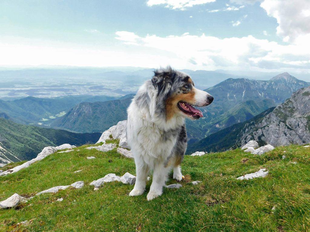 Grintovec, Kamnicko-Savinjské Alpy, Slovinsko