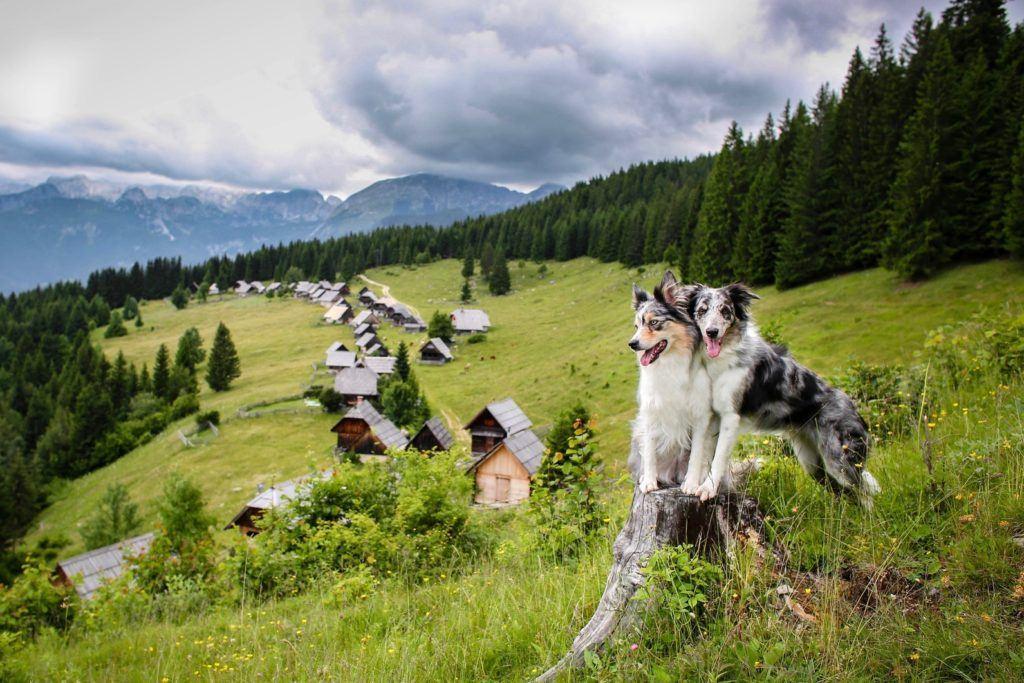 Pokljuka, Julské Alpy, Slovinsko