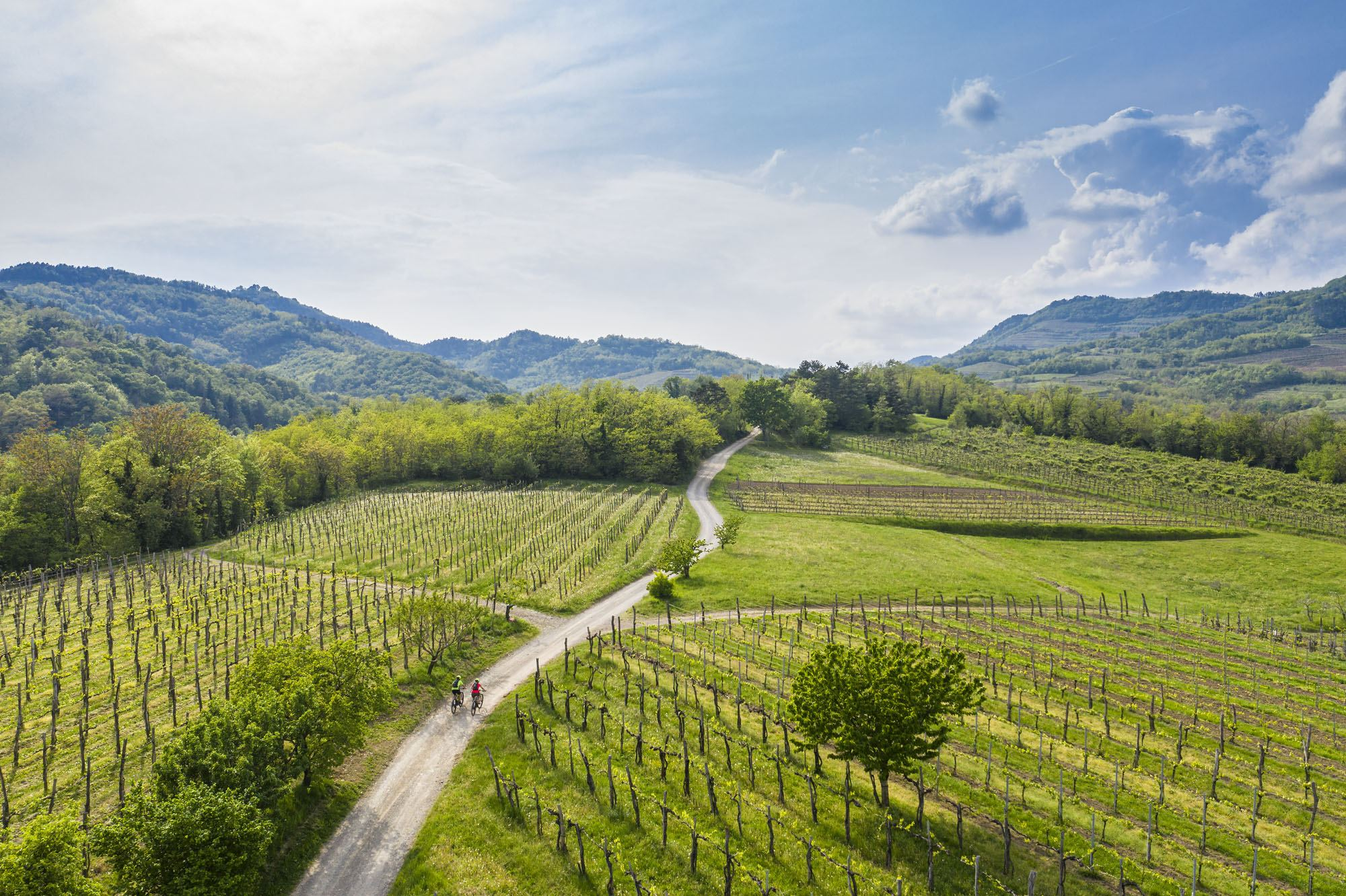 Vinice, Vipavská dolina, Slovinsko. Foto: Uroš Rojc
